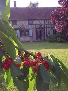 Cherry back garden