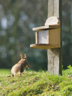 See the Red Squirrels playing all around the farm
