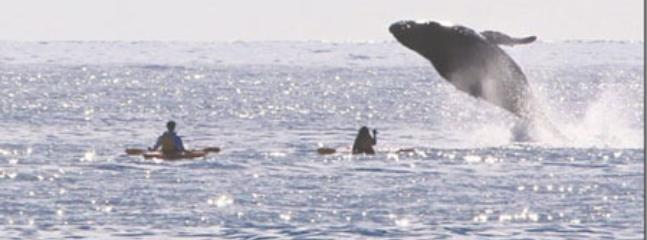 Activities such as kayaking and whale watching -- sometimes at the same time!