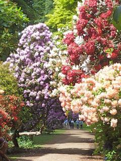 Sheringham Park known for it's superb Rhododendron displays