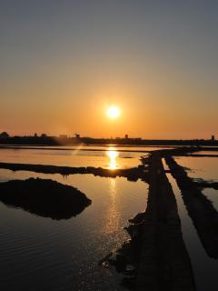 tramonto sulle saline oasi del wwf