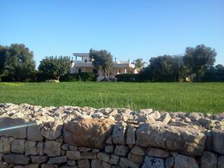 B&B  tra gli ulivi e il mare di Puglia, Speziale