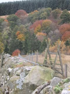I took this shot while out feeding the sheep,the colours are fantastic, looking down into the gorge.