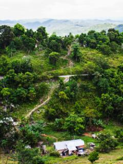 Jamaica has beautiful countryside to explore. Excursions can be arranged.