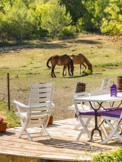 Terrasse extérieur vue sur les chevaux
