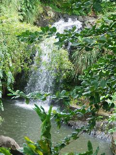 The Annadale Falls- well worth a visit