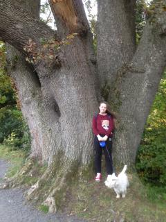 Ancient Oak 8m Girth