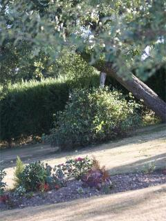 Laid back trees in the garden to match the mood of La Petite Maison