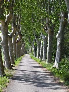 Stroll, cycle or drive down traditional tree lined roads. This is in the village.