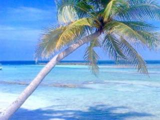 Madi Guest House Thulusdhoo Maldives, Thulusdhoo Island