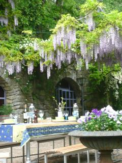 piazetta: wisteria blossoming over your head