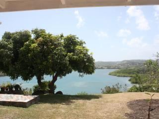 Baywatch mango tree over the bay