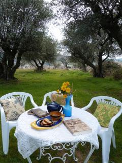 Un descanso a la sombra de los olivos