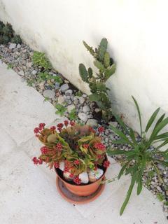 Some garden flowers (pt.1)