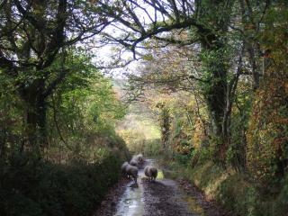 The Shippon, Widecombe in the Moor, Dartmoor