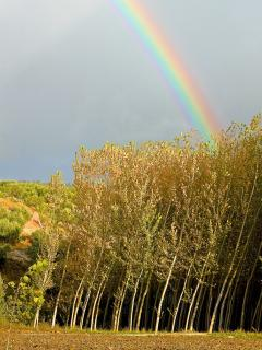 The poplars in the fields near the Cortijo offer a wonderful sound and shade during the summer month