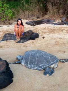 Sea Turtles come ashore on our beach daily