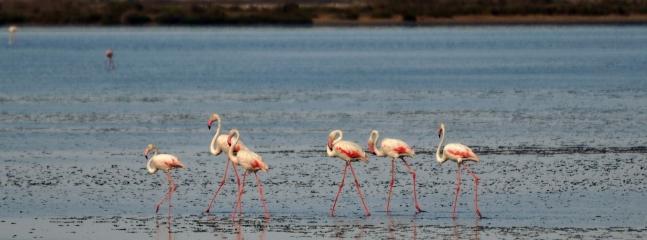 Flamingos RESERVE BIOPHERE Parc Natural Delta de L'Ebre