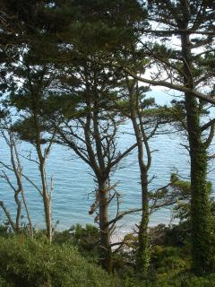 Cliff top path, Meadfoot, Torquay