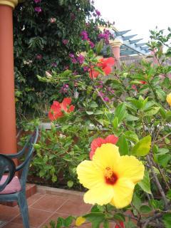 Hibiskus, Bugonvilla, eine Farbenpracht!