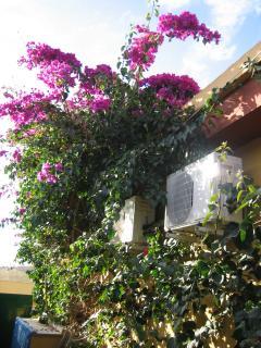 Der hintere Garten unseres Eckbungalows