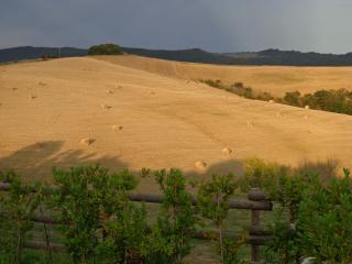 Podere San Luigi - Celiac Friendly!, Volterra