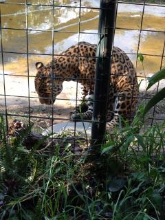 Zoológicoen Gayllabamba a 1:45 minutos de Quito, animales admirables e interesantes