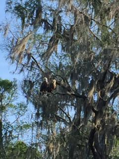 Mr. and Mrs. Eagle - photo taken near Poe Springs