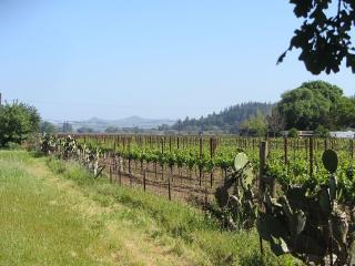 Neighboring vinyards