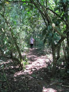 This is the forested path after the bridge that leads to the natural pool!