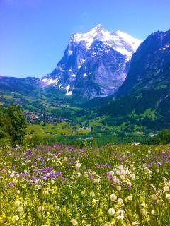 Alpine meadow, on a hike up to Kleine Scheidegg, looking back to Grindelwald