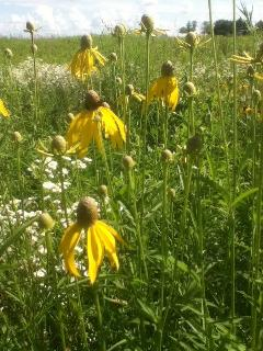 Summer is also beautiful with plenty of prairie flowers.