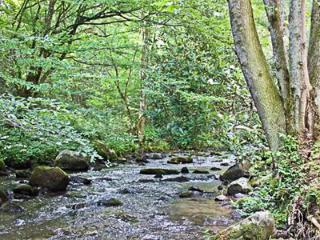 Creek Side Log Home - Morar, Franklin