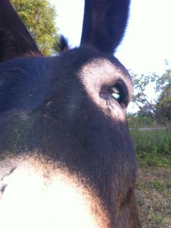 L'âne Pickolo