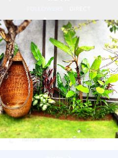 Beautiful cocoon swings in the corner of the garden