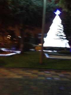 Parque del Agua Potable.- Posterior al Apto. Árbol natural blanqueado por Navidad