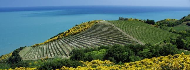 Il nostro mare visto dal promontorio ricoperto di gialle ginestre del Parco  del San Bartolo.
