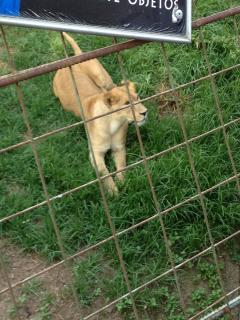 LEÓN en el Zoológico es un atractivo para niños y adultos