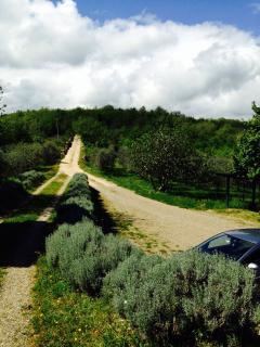 Parcheggio e strada di accesso alla proprietà