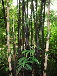 View into our natural wild garden