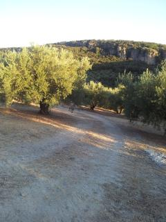 An evening stroll through the olive groves below Olive Grove Farmhouse