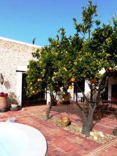 Les orangers dans le patio