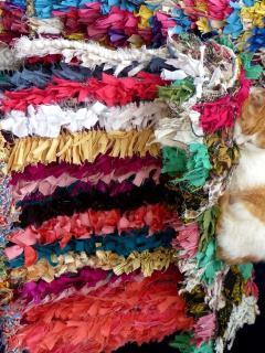 L'un des nombreux chats de la médina...