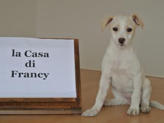 La casa di Francy, Abano Terme