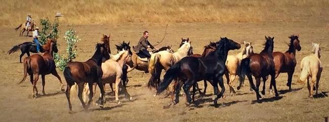 The Man From Snowy River Bush Festival each April offers displays of incredible horsemanship