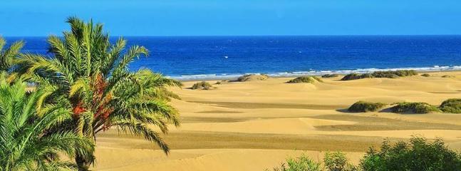 Surrounding -  Fuerteventura's Desert