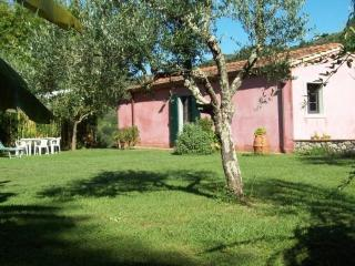 Olivo - Country home under the olive trees w pool, Nocchi