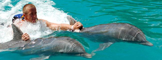 Swim with Dolphins just five minutes away!