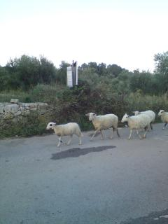 Make room for our road travelling visitors. They are returning from lunch.