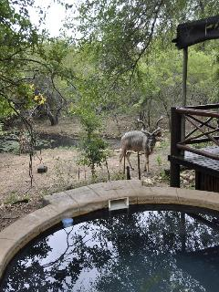 Kudu overlooking pool and elevated deck.